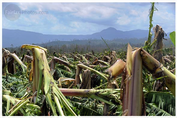 Devestated banana plantations at Tull, North Queensland caused by Cyclone Yasi Saturday 5 February 2011. Picture by Craig Abraham The Age