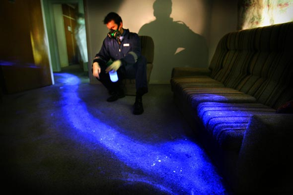 Steven Fowler of police forensics shows how Luminol Blood Detection Reagent Spray shows up bloody drag marks which may be undetectable in daylight. This image of a scene which might be of a location where a person was murdered and dragged away was actually created using pig's blood  Photograph By Craig Sillitoe/The Sunday Age