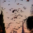 Photograph Craig Sillitoe/The Sunday Age. Bats above the botanical gardens today.
